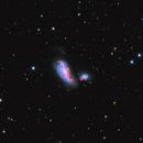 Cocoon Galaxy (NGC 4490),                                Johnny Qiu