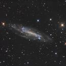 NGC4236,                                jelisa