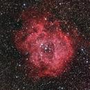 Rosette RGB,                                pterodattilo
