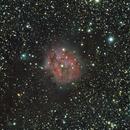 IC 5146 LE COCON,                                Virginie