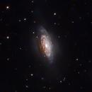 NGC 3521  Intermediate Spiral Galaxy -- LRGB,                                Mike Mulcahy