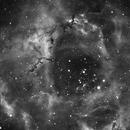 The amazing Rosette Nebula [ NGC2239 ],                                Dan Shallenberger