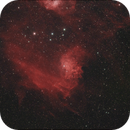 Flaming Star Nebula,                                Callum Wingrove