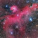IC 2177 - The Seagull Nebula,                    Casey Good