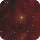 Proplyds near IC1318,                                Eric Coles (coles44)
