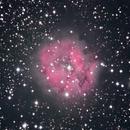 IC5146 Cocoon nebula, unguided.,                                Juan Pablo (Observatorio JuPiTeR)