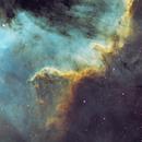 Cygnus Wall,                                Amir Salehi