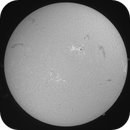 30 January 2016 Solar disc with large prominences gif,                                Andy Devey