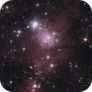ngc 2264 - Above the Cone,                                Pasquale Costantino