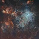 Tarantula Nebula,                                Javier