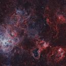 Tarantula Nebula NGC2070,                                Thomas Klemmer