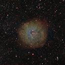 Sh2-170 in HST palette,                                Gordon Haynes