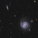 "M100 ""Blowdryer Galaxy"" in LRGB,                                Christopher Scott"