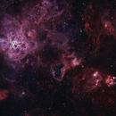 Tarantula - NGC 2070,                                Lee Borsboom