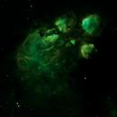 SH2 8 - The Cat's Paw Nebula,                                Doug Gray