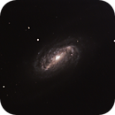 NGC 2903,                                Michael Timm