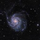 M101,                                John Pungello