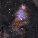 NGC2264 Christmas Tree & Cone Nebula,                                Michael Gorman