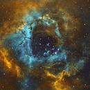 Rosette Nebula - NGC2244 (SHO Imaging Under City),                                William Tan