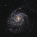 M101 The Pinwheel Galaxy,                                Monkeybird747