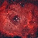 NGC 2244 and Rosette nebula,                                Roy Hagen