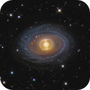 NGC 1398,                                Leslie Rose