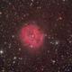 IC5146 Cocoon Nebula,                                Serge