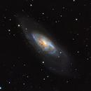 Messier 106,                                Michel Makhlouta