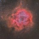 Rosette Nebula,                                Dennis Sprinkle