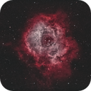 Rosette Nebula,                                Steven Miller