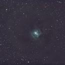 NGC 7023,                                Robert de Groot
