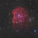 Monkey Head Nebula with DSLR,                                Michael S.