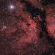 Gamma Cygni Nebula IC1318,                                Hartmuth Kintzel