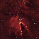 NGC 2264,                                Patrice RENAUT
