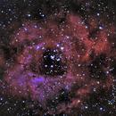 NGC 2244 - a Christmas Rose,                                Tom Gray