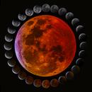 Total Lunar Eclipse [2019/01/20],                                Rathi Banerjee
