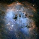 Space Tadpoles in IC 410,                                Aaron Freimark