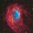 Lower's nebula / LBN 863 / Sh2-261,                                Maroun Habib