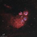 Cat's Paw Nebula,                                Astrosingh