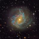 The Southern Pinwheel Galaxy,                                Leslie Rose