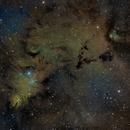 NGC 2264 wide field,                                Erich Krause