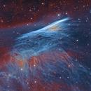 RCW 37 Pencil Nebula,                                Zhuoqun Wu