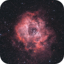 NGC 2244 Rosette Nebula,                                Gebhard Maurer