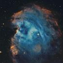 NGC 2174/2175 The Monkey Head Nebula SHO,                                Tom Peter AKA Ast...