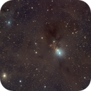 NGC 1333 Reflection Nebula in Perseus,                                David Frost