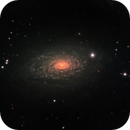 M63 - the flowers are blooming,                                Tom Gray