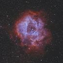 The Rosette Nebula,                                Julien Lana