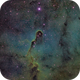 SHO Elephant Trunk in Cepheus,                                Jonathan Young