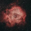 The Rosette Nebula,                                Sean Smith