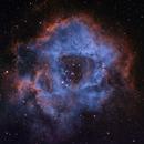 Rosette Nebula,                                Radek Kaczorek